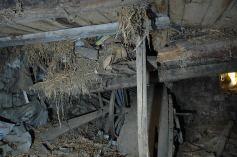 effondrement-plafond-etable-2