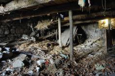 effondrement-plafond-etable-3